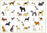 ... dogs, horses, people, and other domesticated species with large